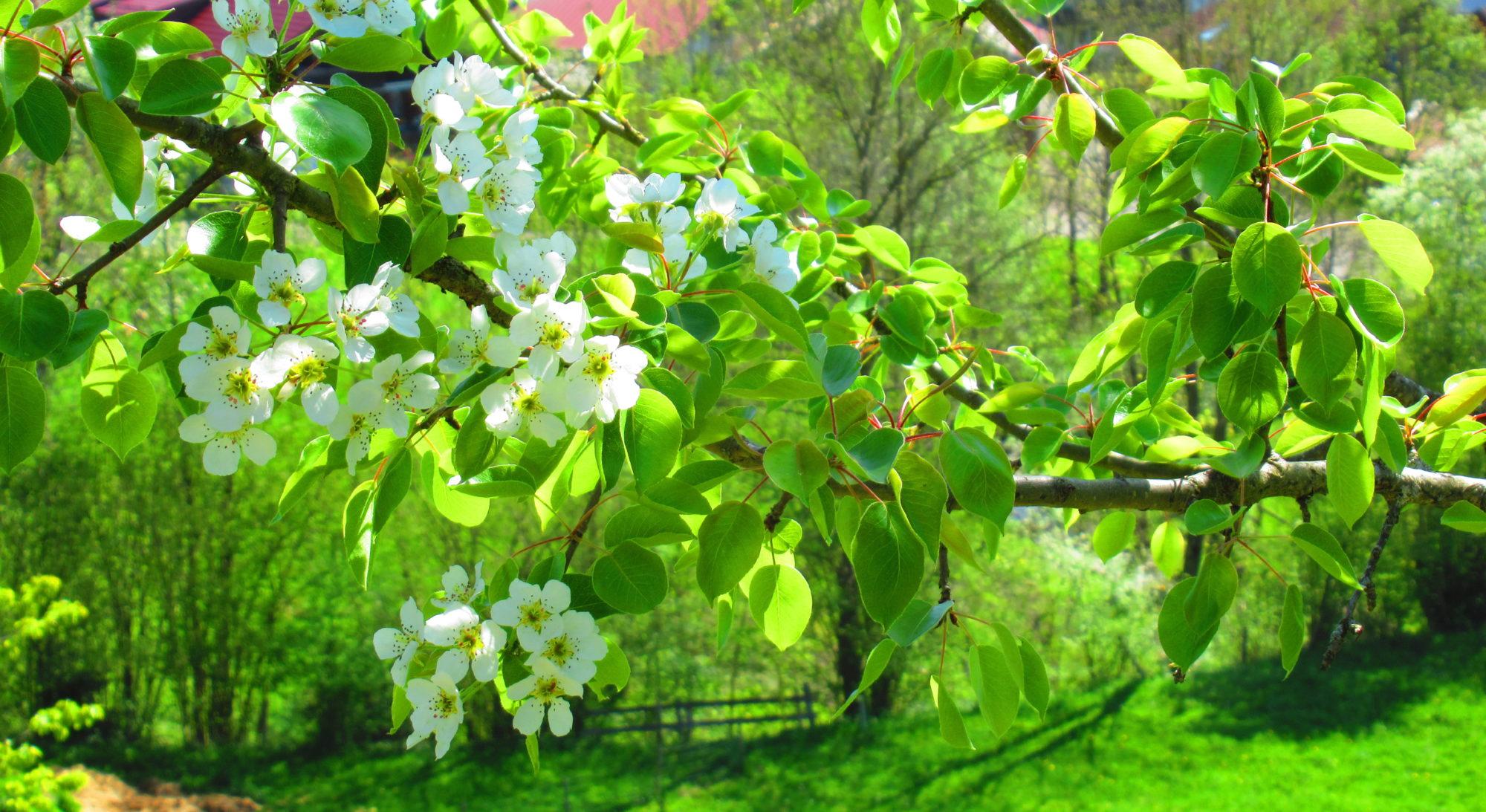 Garten Kainz
